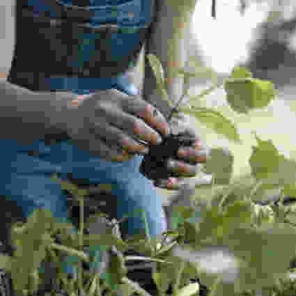 Pflanzentransport bei toom goes Mehrweg